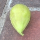 cucumber-lda