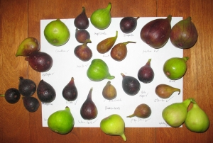 Assorted figs