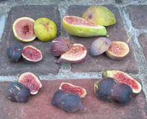 brooklyn-white-cucumber-longue-daout-marseilles-black-ginos-black-double-figs-improved-celeste-25-1024x830