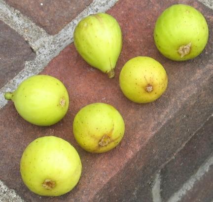 lemon-blanche-16