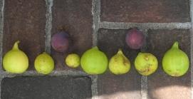 long-yellow-excel-u-ital-white-conadria-lsu-gold-lsu-gold-emerald-strawberry-tigers-8-1024x529