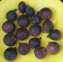 mt-etna-figs
