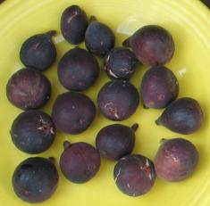 mt-etna-figs