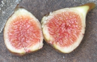 breba fig Florea (3)