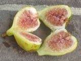 Brooklyn White fig