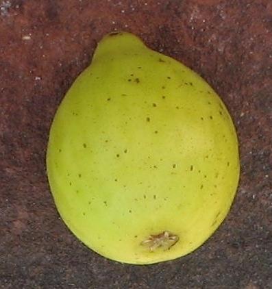 lemon-blanche-10