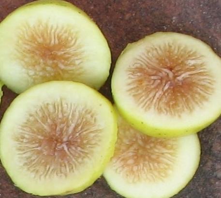 lemon-blanche-2