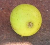 lemon-blanche-6