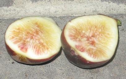LSU Purple fruit