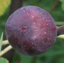 malta-purple-red-4