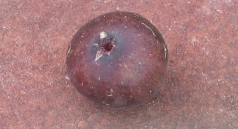 malta-purple-red-main-9