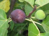malta-purple-red