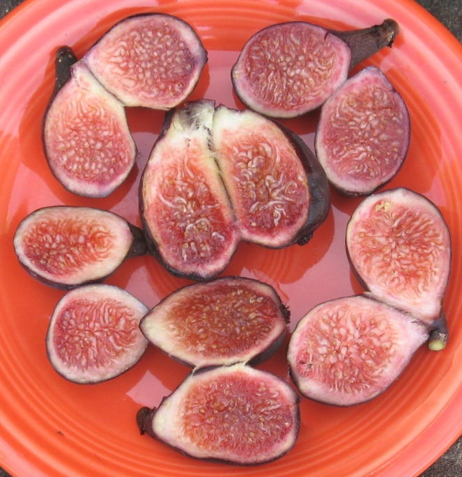 Negronne breba figs