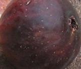 palermo-red-malta-purple-red-skin-2