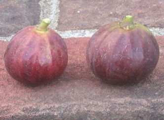 palermo-red-mpr-sals-5