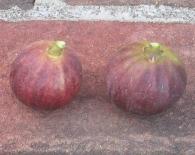 palermo-red-mpr-sals-7