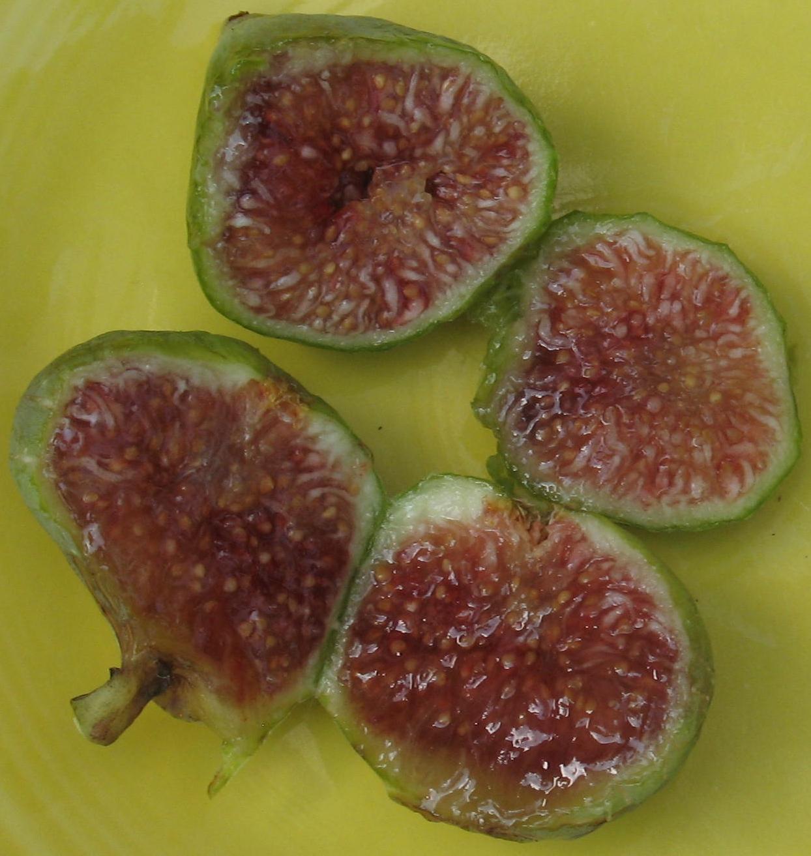 Mountain Figs