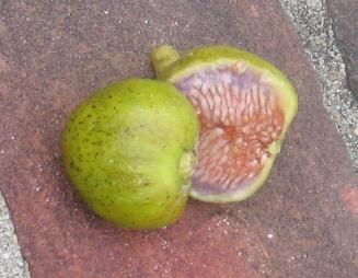 Banana breba (7)
