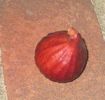 Malta Purple Red (6)