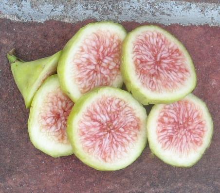 Cucumber LDA (2) (1006x886)