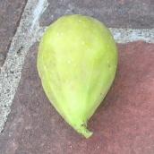 Cucumber LDA (707x707)