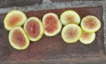 brooklyn-white-and-lemon-blanche-15