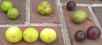 brooklyn-white-paradiso-mary-lane-malta-purple-red-longue-daout-negronne-2