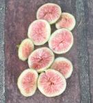 Florea (sugar-berry)
