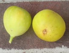 long-yellow-31