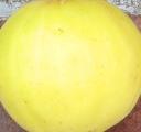 long-yellow-skin-5