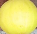 long-yellow-skin