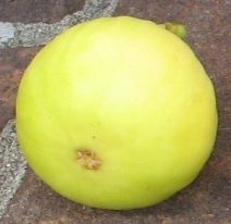 long-yellow