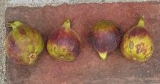 violet-sepor-16-1024x543
