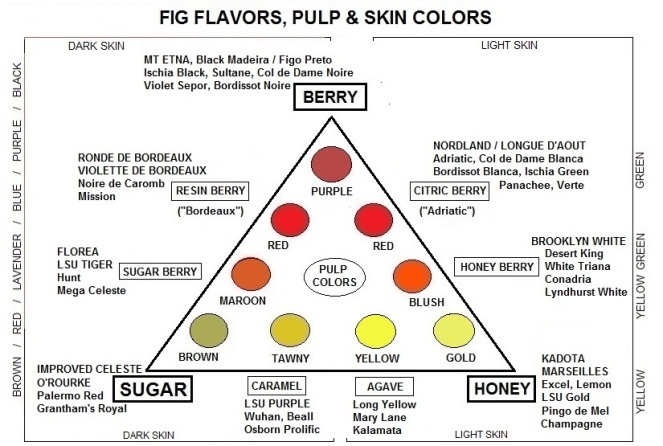 big-fig-triangle-9-flavors