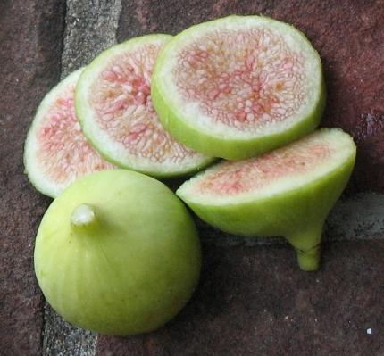 Conadria (tannin berry)
