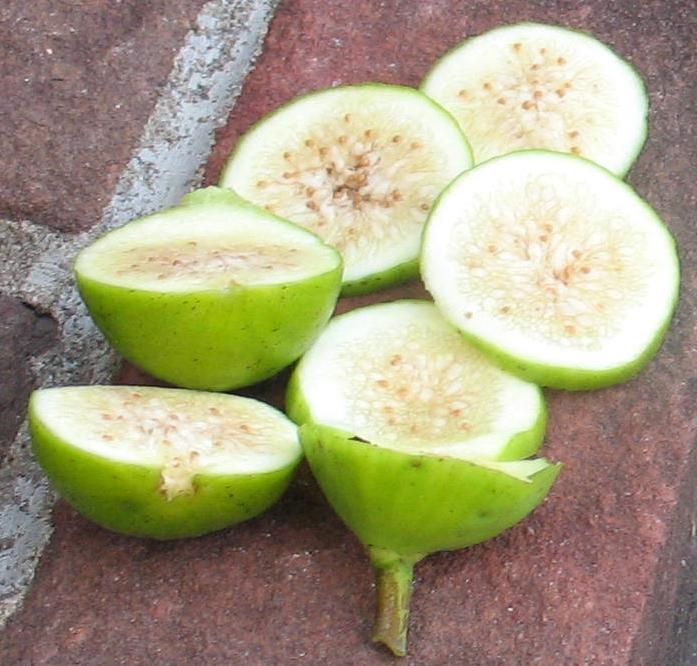18 Excellent Fig Varieties