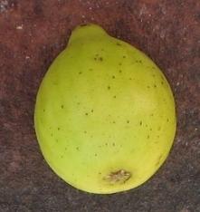 lemon-blanche-17