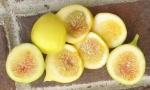 Long Yellow (honey)
