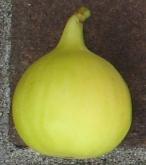 long-yellow-7-320x363