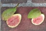Nordland (citric berry)