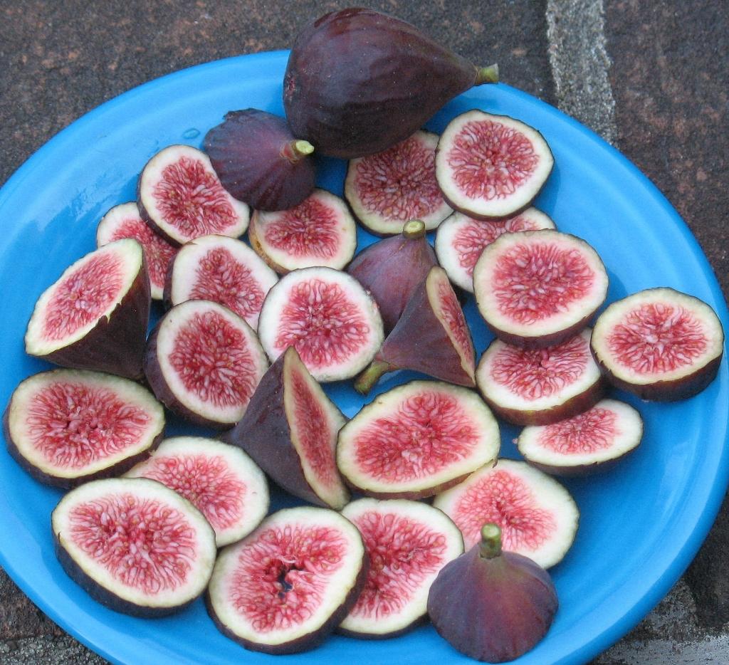 Best Fig In Ground