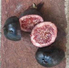 Violette de Bordeaux: Nero 600m (resin berry)