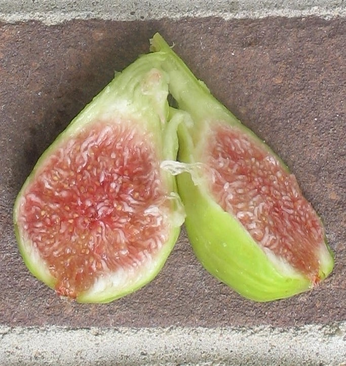 Fig Flavors, Pulp & Skin Color Examples