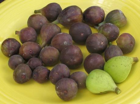 27-figs-mt-etna-brooklyn-white-lsu-purple-black-madeira-6