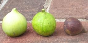 emerald-strawberry-lattarula-mt-etna-u-5