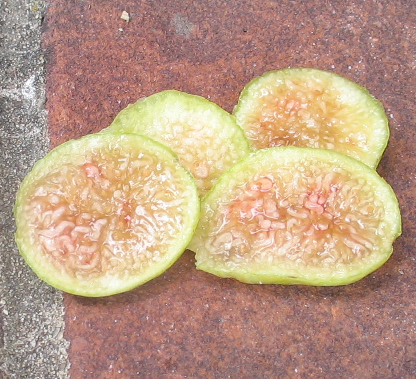 Tannin Berry Figs
