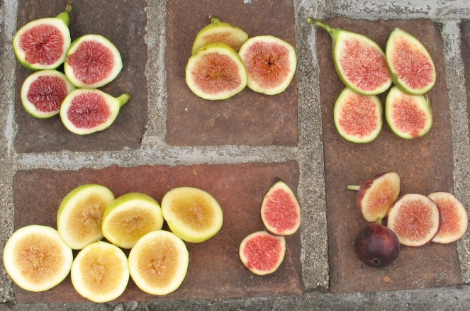 many-figs