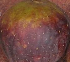 violet-sepor-skin-7