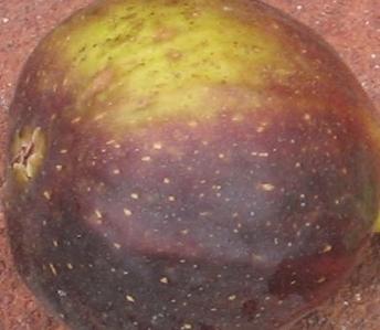 violet-sepor-skin
