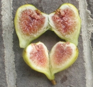 brooklyn-white-fig-2